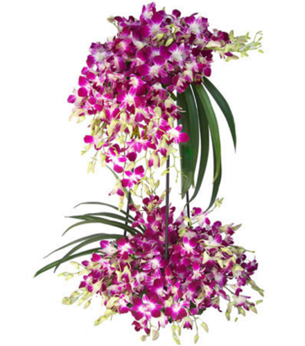 2 Layer Arrangement of 40 Orchids