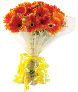 Flowers Delivery in BhilaiBunch of 20 Gerberas