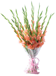 Flowers Delivery in BhilaiA hand tied bunch of 15 fresh Gladioli.