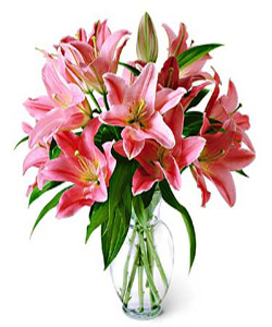 Oriental Lilliums in a glass vase