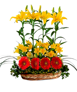Basket of Lillium and Gerbera