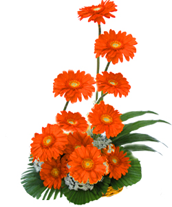 Basket arangement of 12 Gerberas